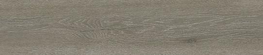 伏爾加銀橡單片圖