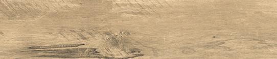 楓丹秋木單片圖