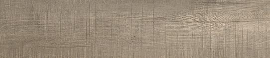 加州銀木單片圖