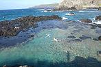 hawaii maui swimmers seastars tide pool ocean tropical