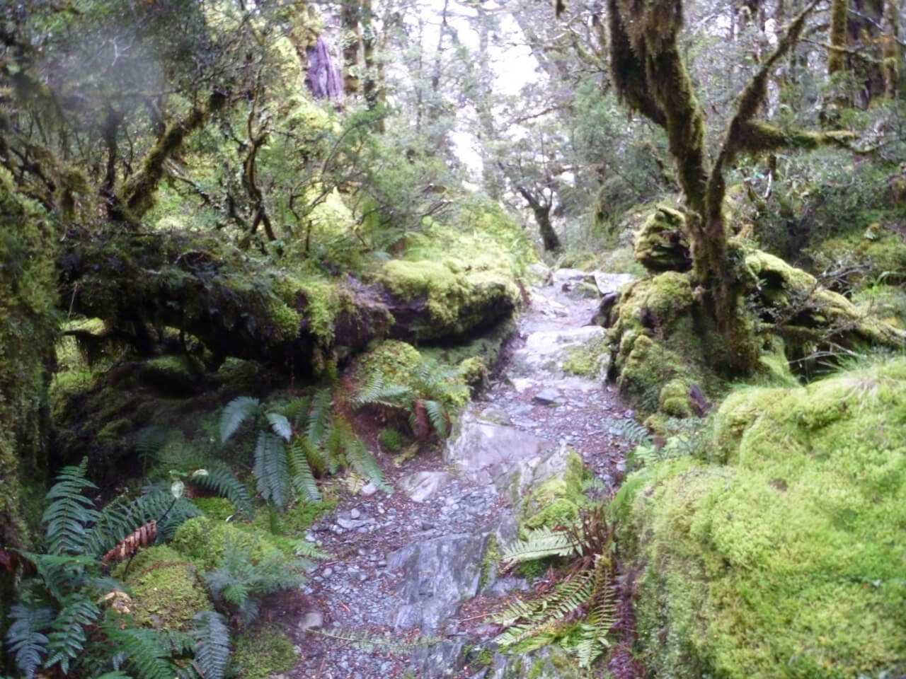 the routeburn track new zealand 2