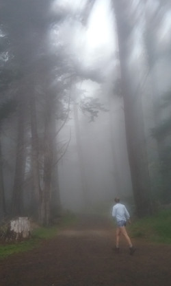 misty forest and hiker in the Poli Poli State Park, Maui, USA