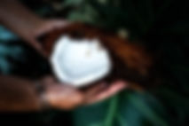 an opened coconut being held in hands