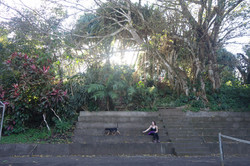 a girl and a dog resting next to a tennis court in the deep jungle nearLake Arenal, Costa Rica