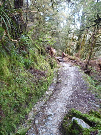 Proprioception & Other Benefits of Trail Running 4