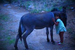 a little girl hugging a donkey in the desert, Sonoita, Arizona, USA