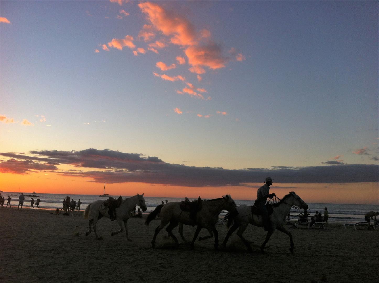 Costa Rica Tamarindo horses sunset