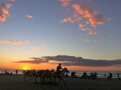 horses on the beach in Tamarindo, Costa Rica