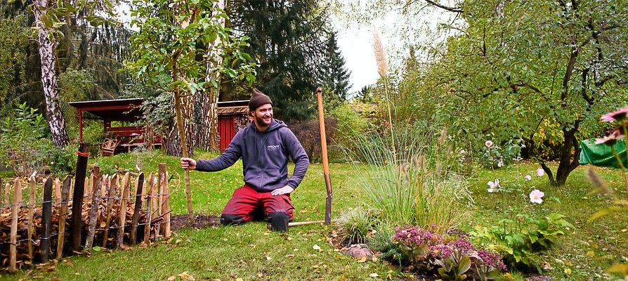 Ersatzpflanzung Baumfällung Fällung Baum