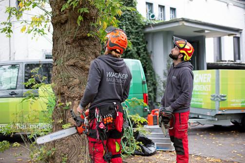 Baumfällung Stadtgarten Köln