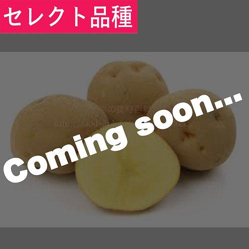 きたあかり(ジャガイモ)