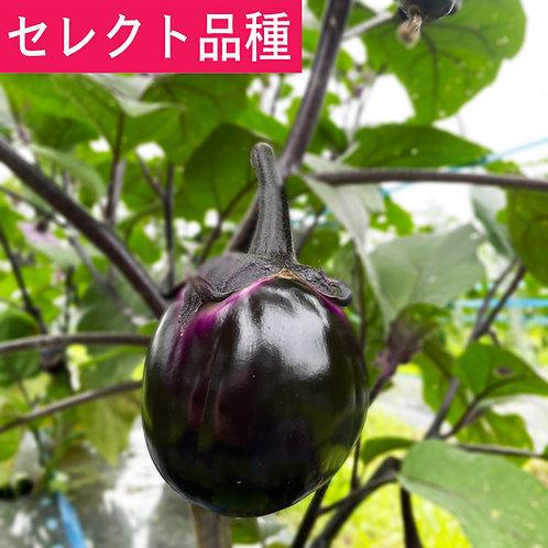 ビステッカ(丸ナス)4個