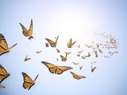 Butterflies in formation
