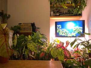 My lounge/greenhouse!