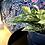 Epipremnum marble queen the ginger jungle easy indoor plants uk