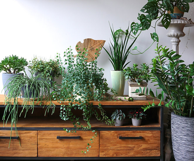 Different indoor plants in living room with decorations on the table Stylish composition o