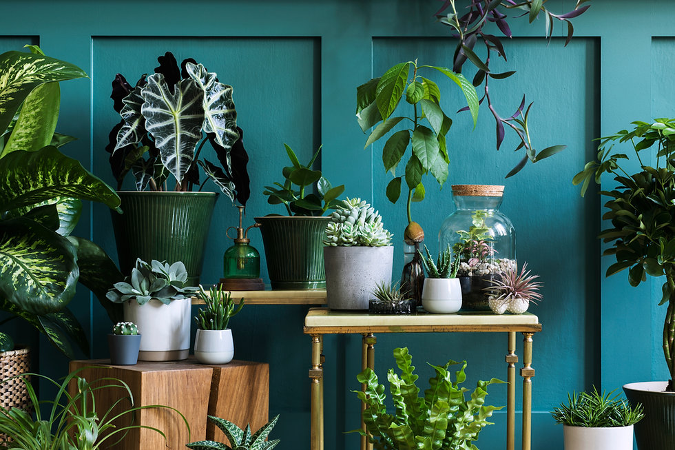 Stylish composition of home garden interior filled a lot of beautiful plants, cacti, succu