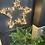 Araucaria heterophylla 'Norfolk Island Pine' The Ginger jungle the online houseplant shop