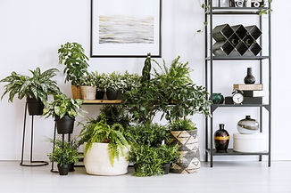 Houseplants on the floor and table standing next to a metal shelf with decorations in livi...ior.jpg