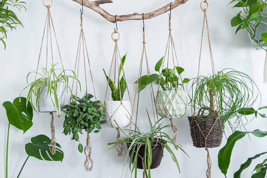 Six jute twine macrame plant hangers are hanging from a driftwood branch. Some of them hav
