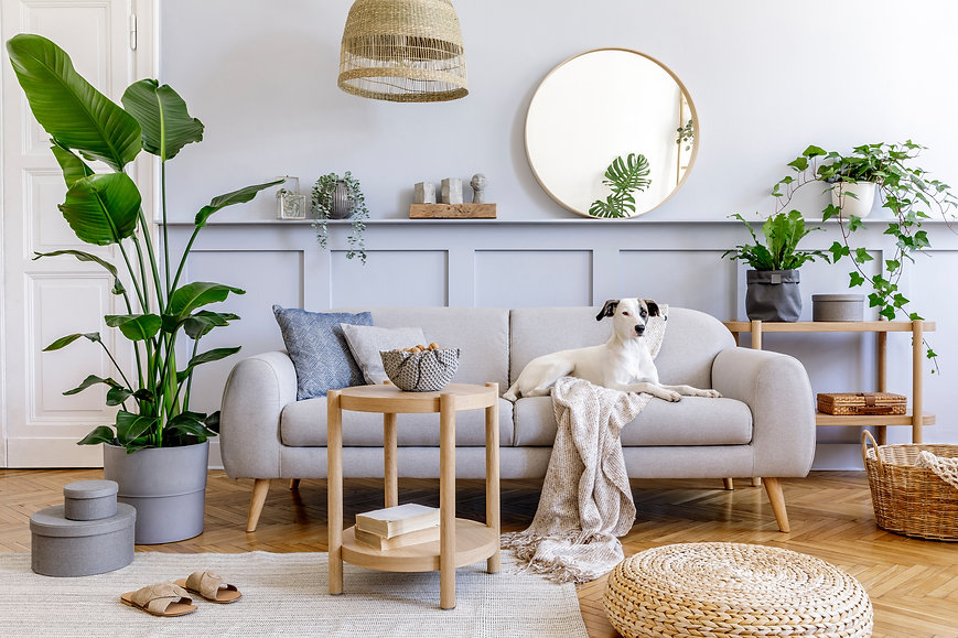 Interior design of living room with stylish grey sofa, coffee table, tropical plant, mirr