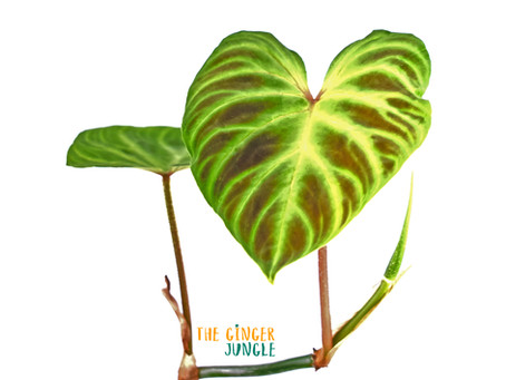 The Ginger Jungle go's live!