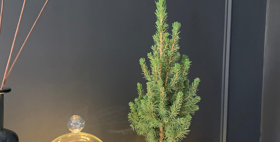 Mini Christmas by post UK - Sussex Christmas tree delivery