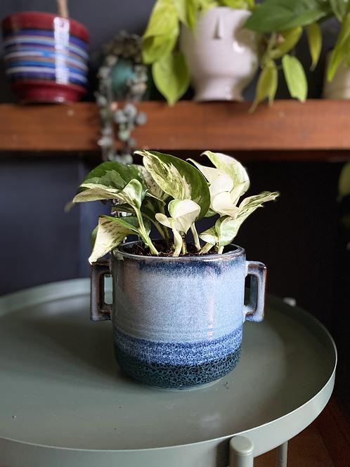 Manjula pothos UK Happy leaf The Ginger Jungle the online houseplant shop