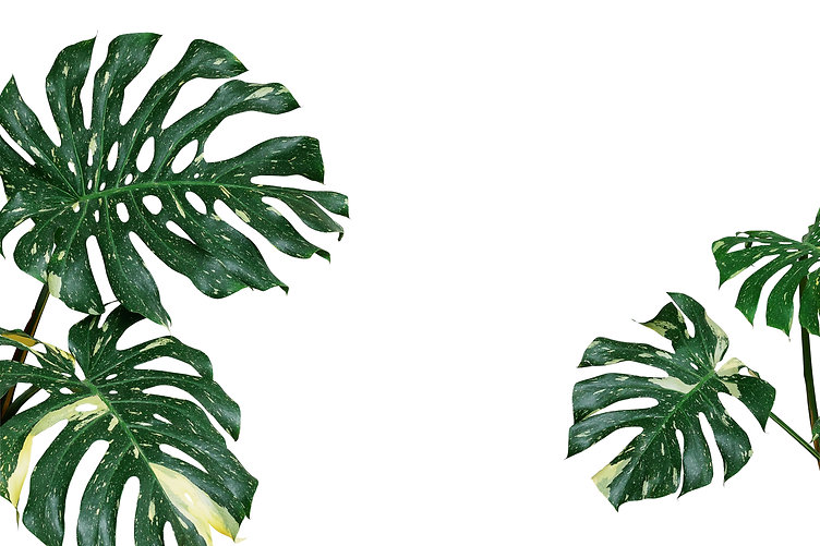 Variegated plant leaves nature backgroun