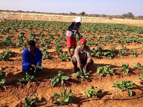 Gemüseanbau-1.jpg