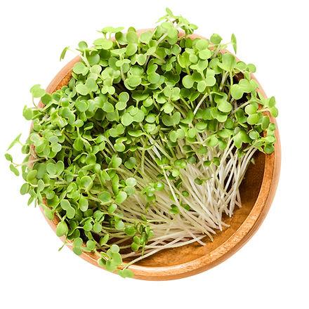 White mustard microgreen in wooden bowl.