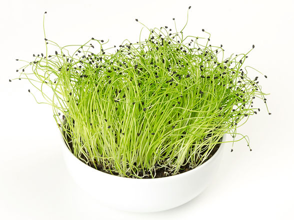 Leek microgreen in white porcelain bowl.