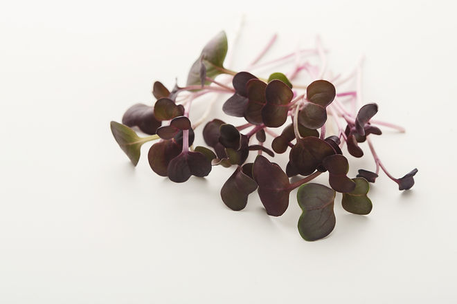 Micro greens isolated on white backgroun
