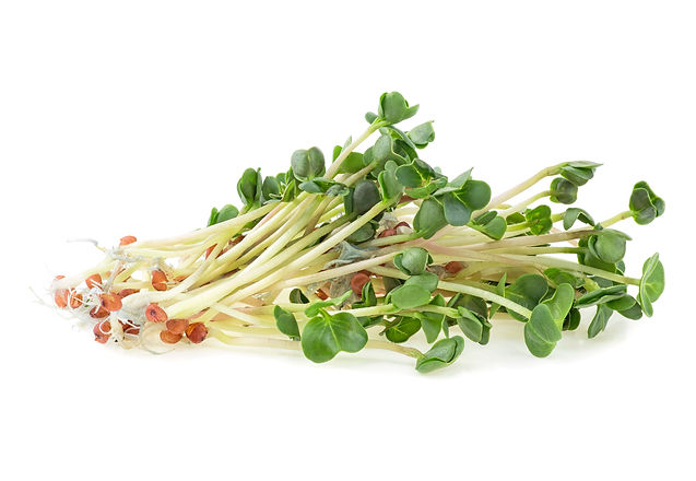 Young sprout microgreen isolated on a wh
