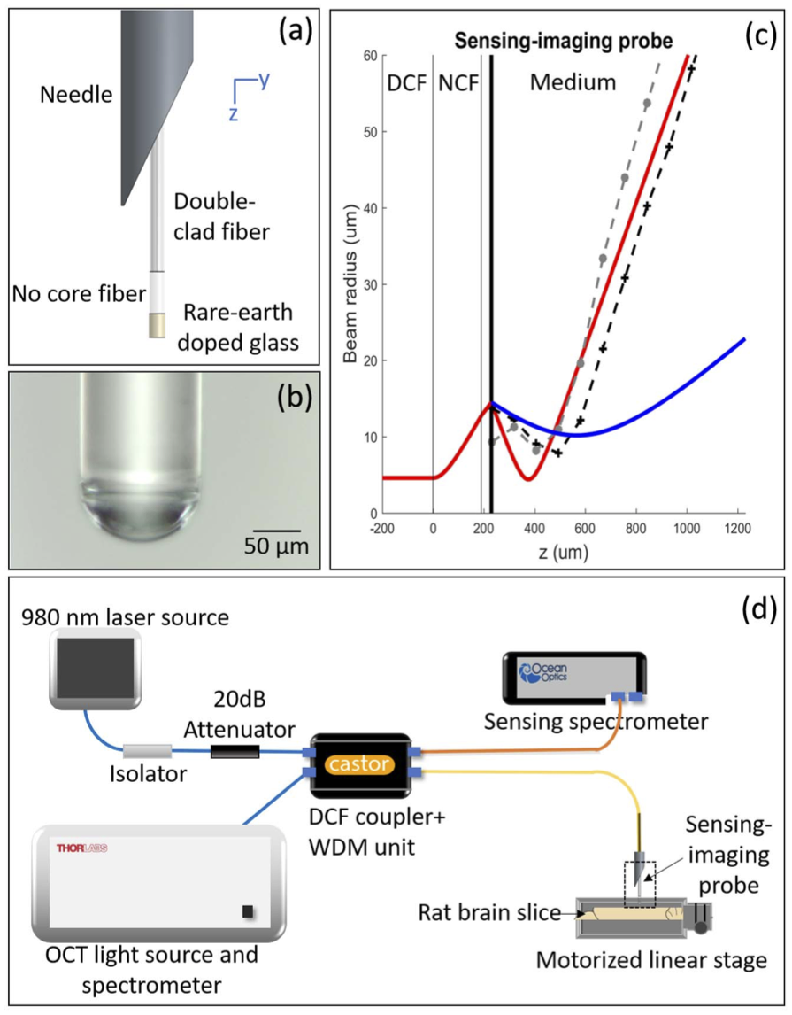 Combined imaging and sensing probe