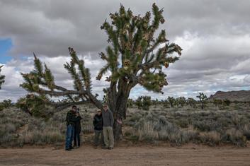 Mojave Trail-3443.jpg