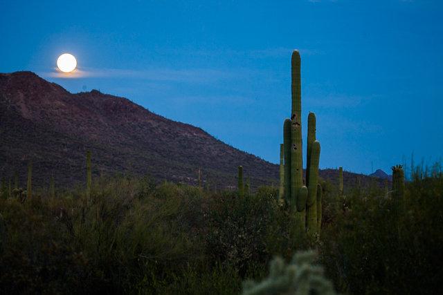 Cactus ridge in morning glow