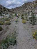 Mojave Trail-3874.jpg