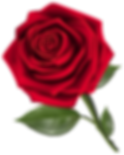 Beautiful_Red_Rose_PNG_Clipart-162.png