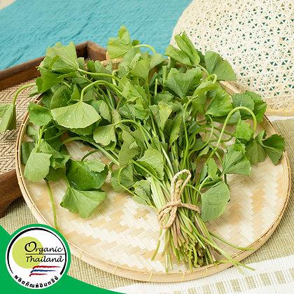 บัวบกเล็ก Organic (200 กรัม/แพ็ค)