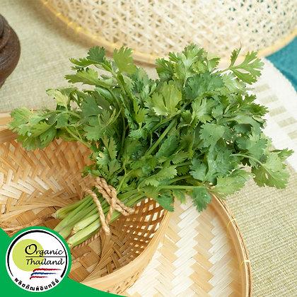 ผักชีไทย Organic (50 กรัม/แพ็ค)
