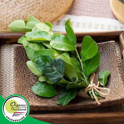 ใบมะกรูด Organic (100 กรัม/แพ็ค)