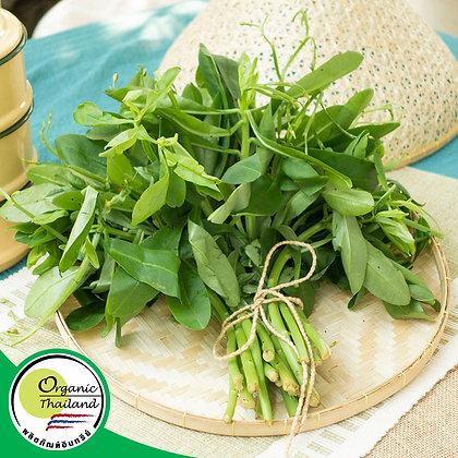 ใบโสมไทย Organic (200 กรัม/แพ็ค)