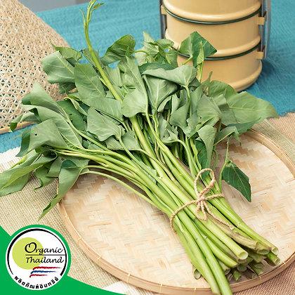 ผักบุ้งไทย Organic (300 กรัม/แพ็ค)