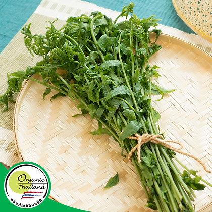 ผักกูด Organic (150 กรัม/แพ็ค)