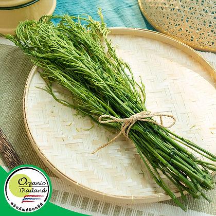 ชะอม Organic (200 กรัม/แพ็ค)