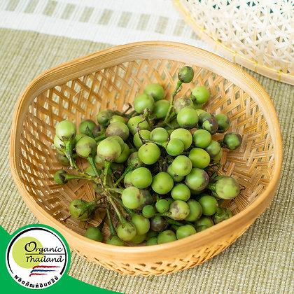 มะเขือพวง Organic (200 กรัม/แพ็ค)