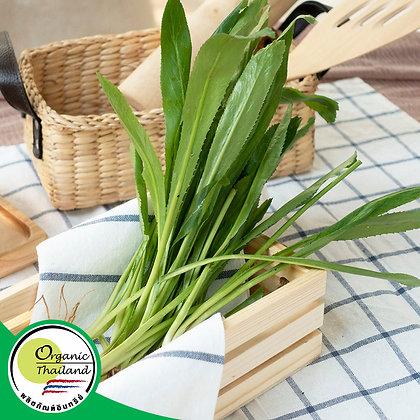 ผักชีฝรั่ง Organic (200 กรัม/แพ็ค)