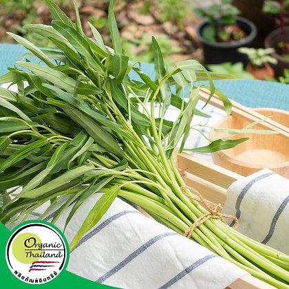 ผักบุ้งจีน Organic (200 กรัม/แพ็ค)