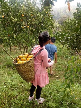 ส้มสายน้ำผึ้ง อ.เชียงดาว (Pre-Order)